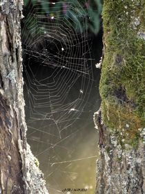 Spinnennetz am Bach by badauarts