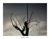 Shadows by Alejandro Campos