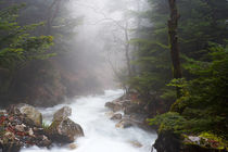 Mist and creek, Taygetus mountain von Christos Andronis