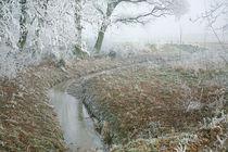 Winter im Moor by Paul Artner