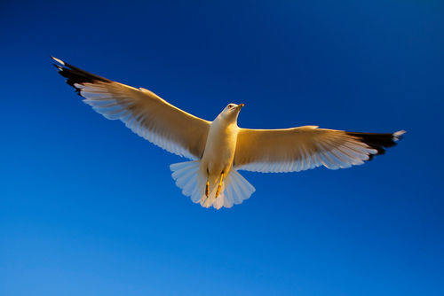 White-bird-soaring-in-the-blue-sky