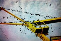 Vogelschwarm von pahit