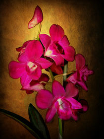 Orchidee by Elke Balzen