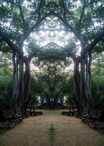 Enchanted forest von Aman Bhutani