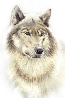 Wolf von Karin Russer