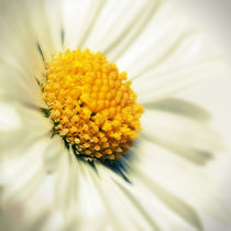 marguerite by tr-design
