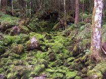Zauberwald von laubfrosch