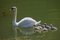 Swan Lake 3 von safaribears