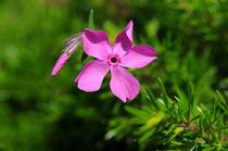 flower by Greta Gryz