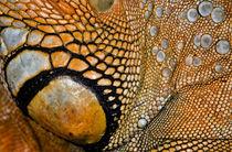 Iguana Texture von Keld Bach