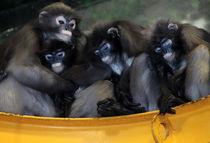 Monkey Family by Jessica Evans