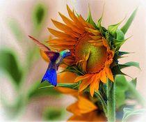 hummingbird on  sunflower  von john kolenberg