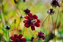 Bumblebee von kwiatek