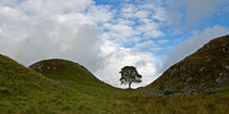 Sycamore Gap III von David Pringle