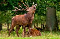 Hear Me Roar! von Keld Bach