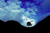 Sycamore Gap Silhouette von David Pringle