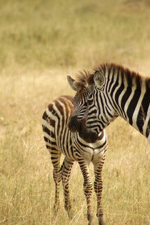 Zebra Mam and kiddy by Claudine Marteling
