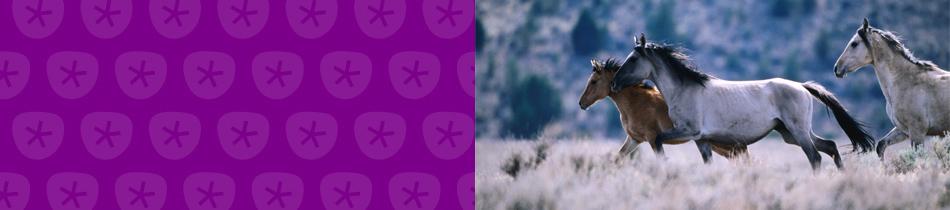 Banner_pferde