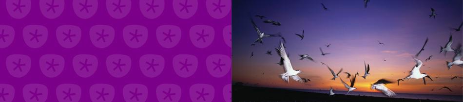Banner_vögel