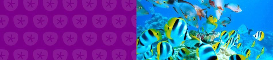Banner_unterwasser