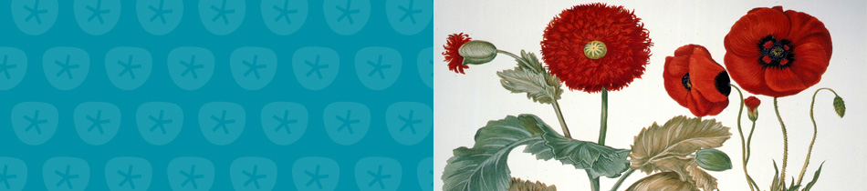 Banner_botanischedrucke