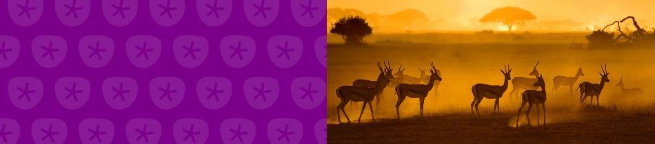 Banner_antilopen