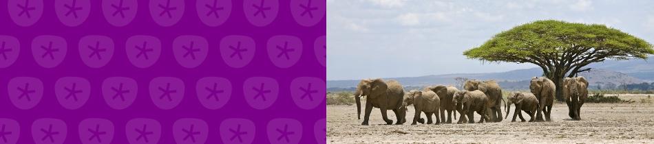 Banner_elefanten