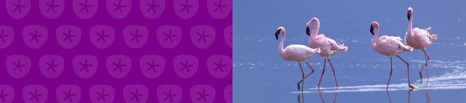 Banner_flamingos