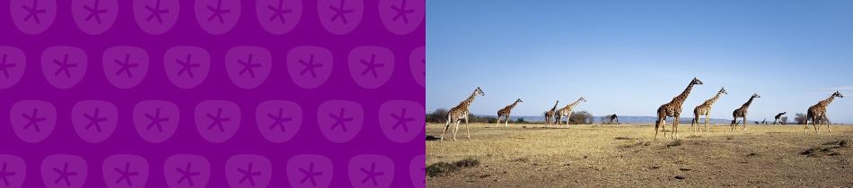 Banner_giraffen
