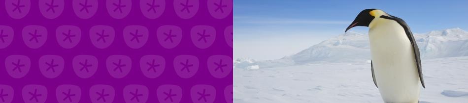 Banner_pinguine