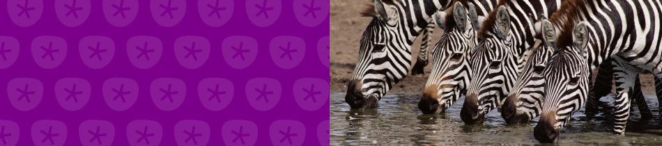 Banner_zebras