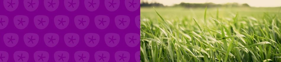 Banner_gräser