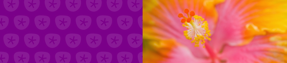 Banner_hibiskus