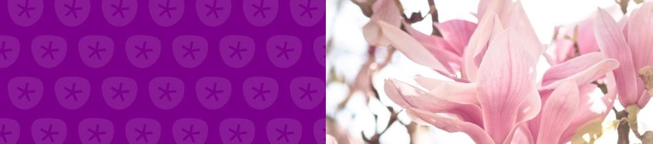 Banner_magnolien