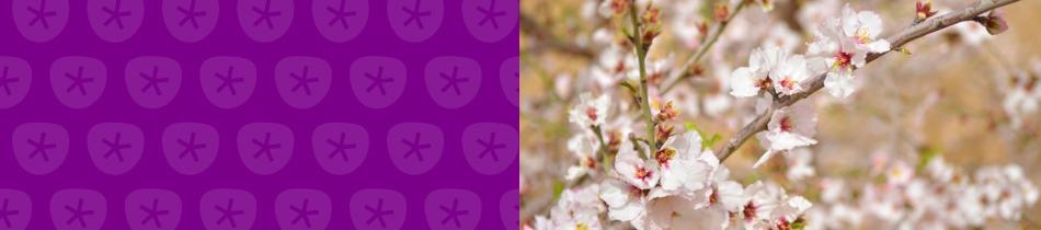 Banner_mandelblüten