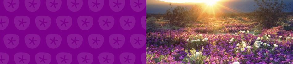 Banner_wildblumen