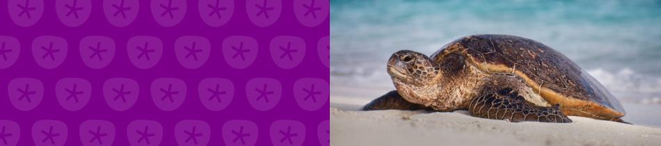 Banner_schildkröten