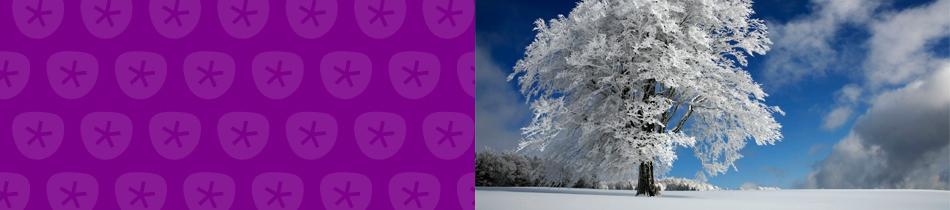 Banner_winter