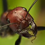 Portrait-of-ant