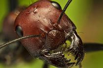 Portrait-of-ant