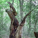 Wälder und Baumveteranen